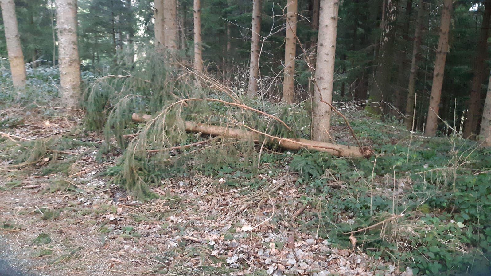 Sturmschaden in Hochkuchl