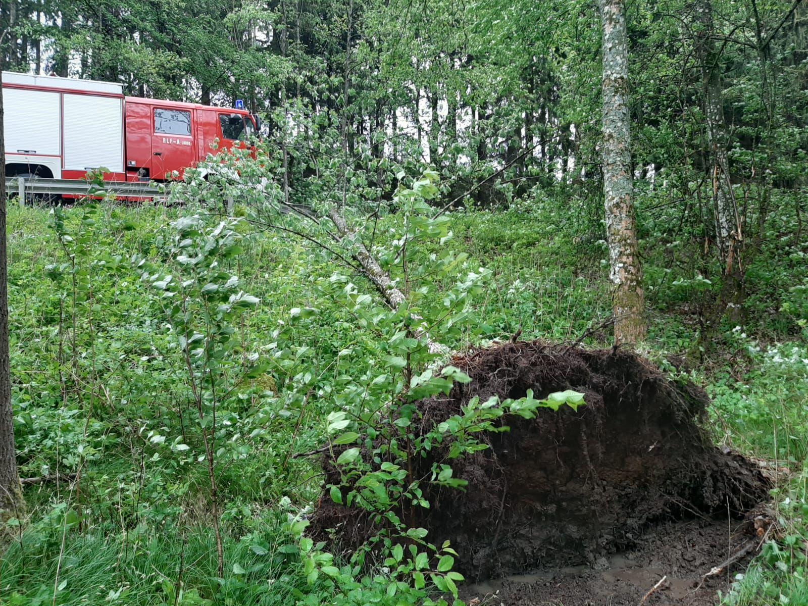 Sturmschaden im Totenholz